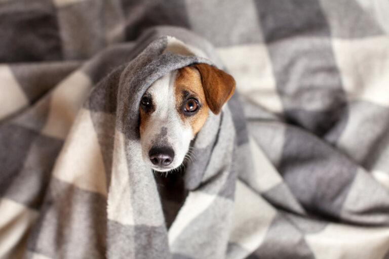 constipação nos cães
