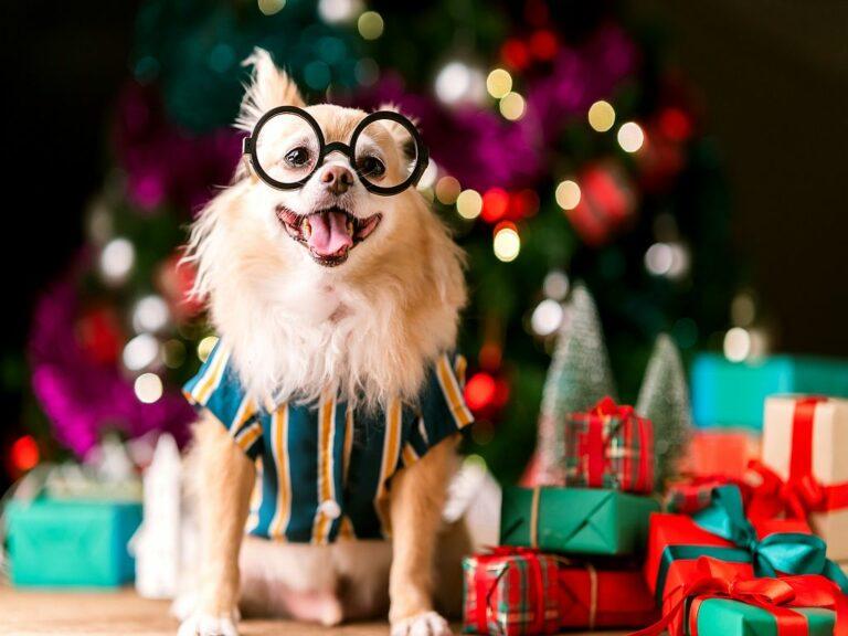 Prendas de natal para cães