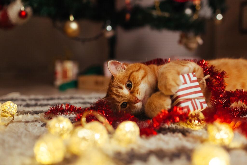 rote Katze spielt mit Weihnachtsgeschenk