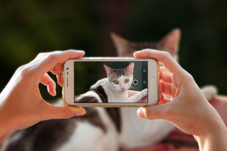 tirar fotos a gatos
