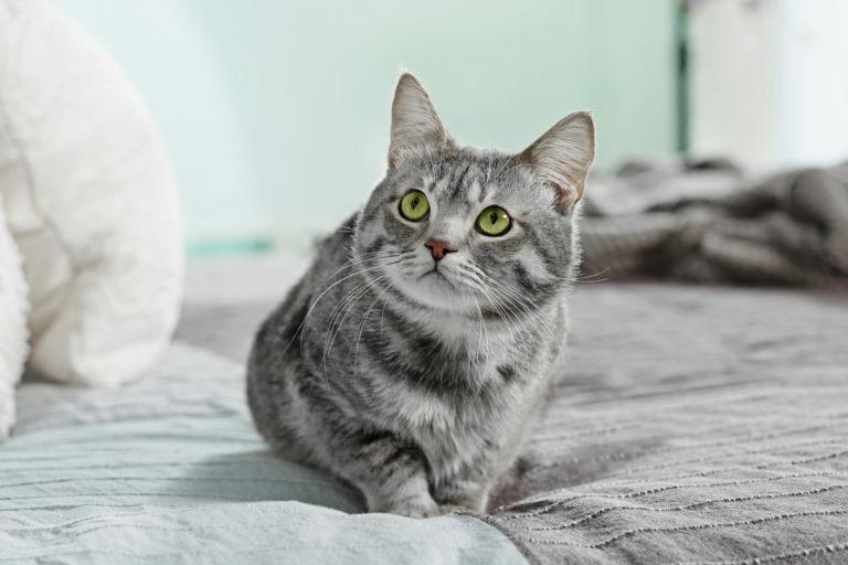 o que fazer para evitar o xixi de gato na cama