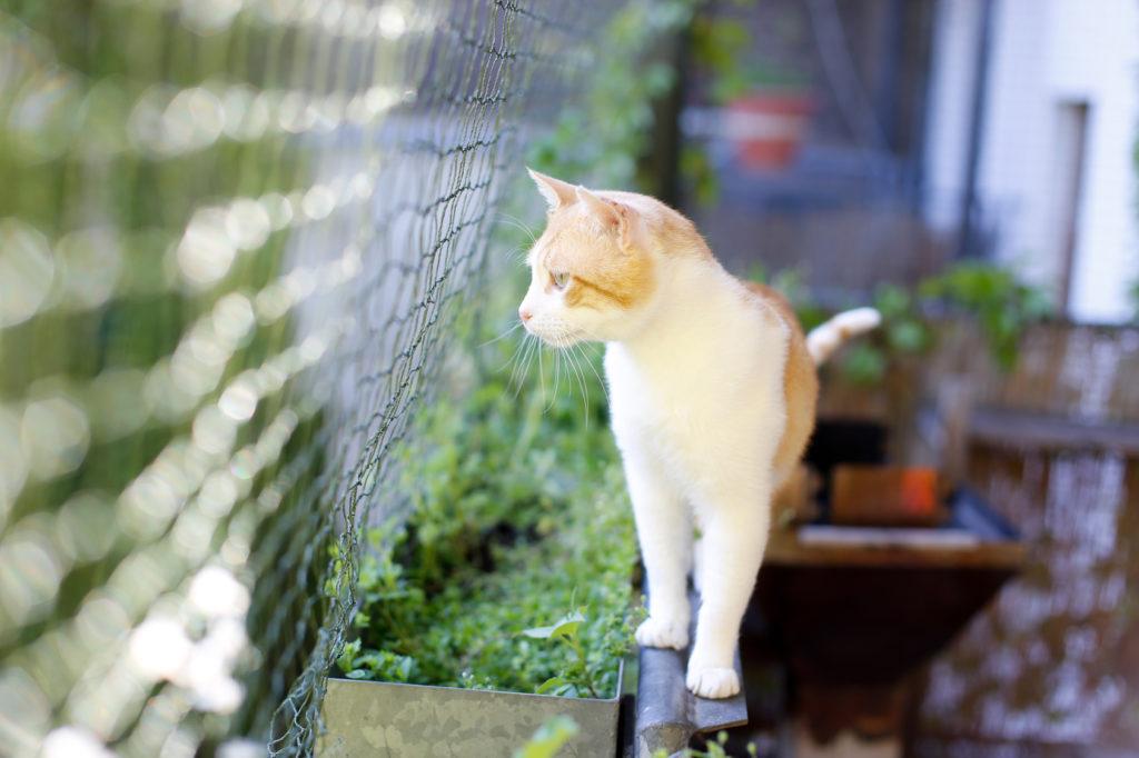 Tornar a varanda segura para gatos: Os gatos podem passear