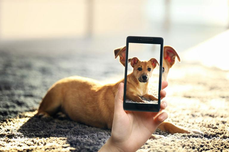 tirar fotos a cães