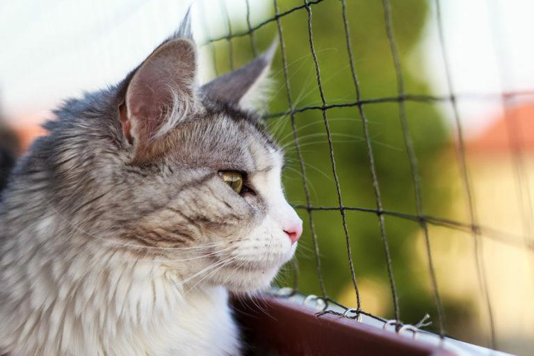 Tornar a varanda segura para gatos: use uma rede de proteção