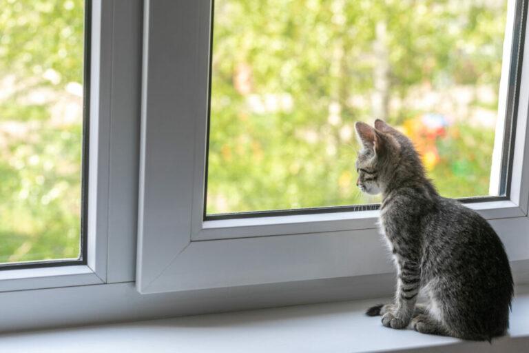 Coronavírus dos gatos: saiba mais sobre este tema