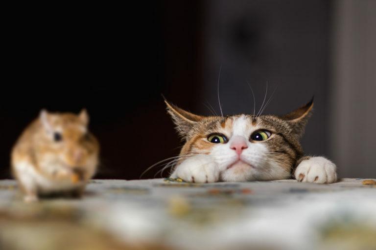 instinto-caca-gatos