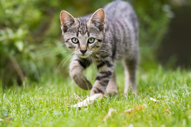jardim-para-gatos