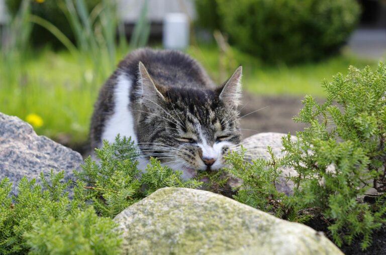 Plamtas tóxicas para gatos: existem várias plantas comuns que são tóxicas para os gatos
