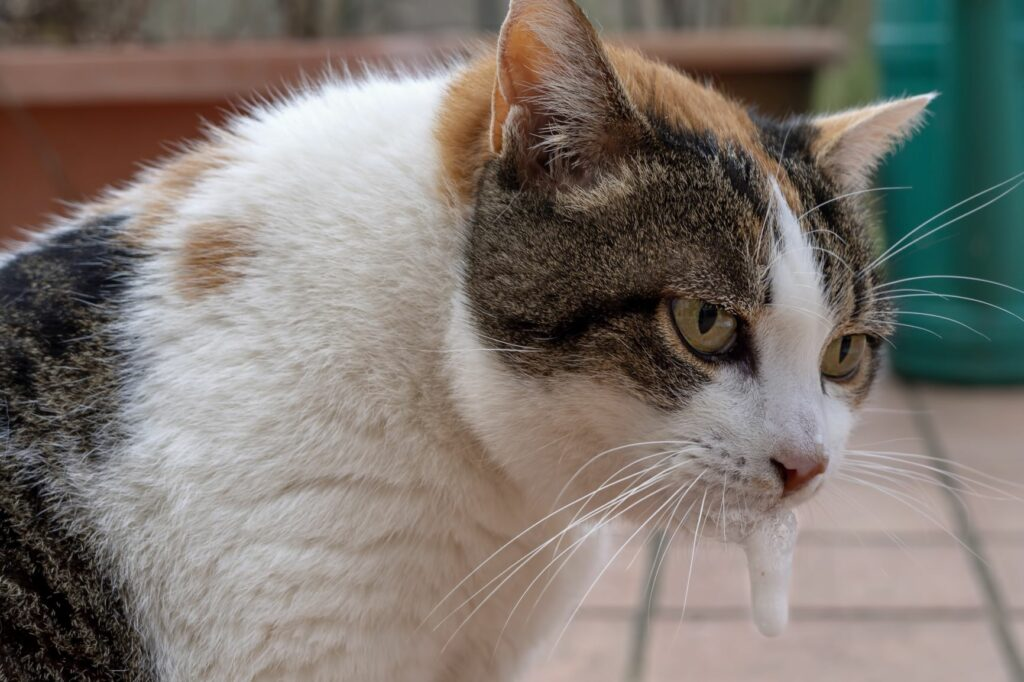 Plantas tóxicas para gatos: Se o seu gato está a salivar demais ou se vomitou é possível que tenha comido algo tóxico, por isso deve levá-lo imediatamente ao veterinário.