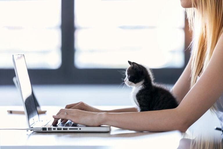gatinho a olhar para um computador