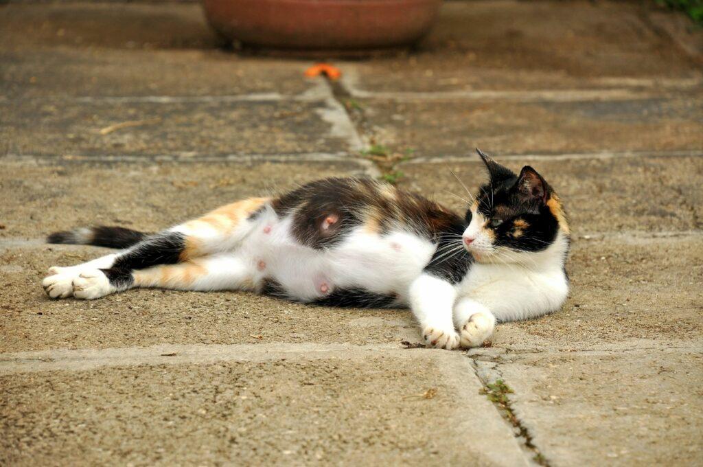 Nasciemnto de gatinhos