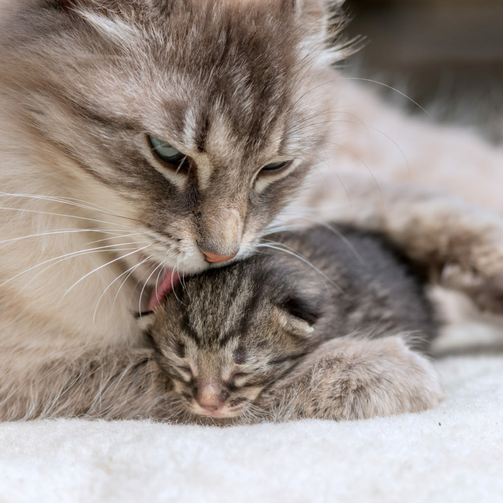 Nascimento de gatinhos