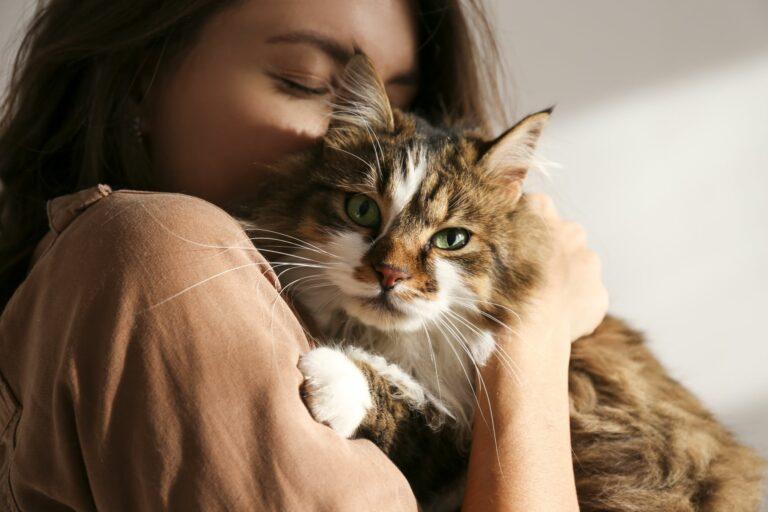 adotar-gato-covid-19