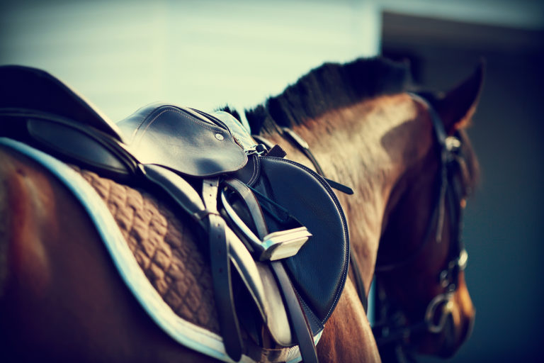 selas-cavalos