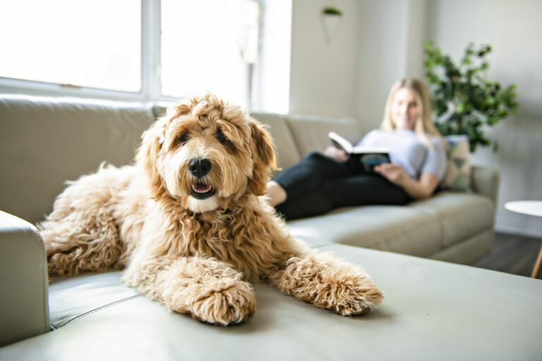 Ein Hund liegt auf dem Sofa und schaut in die Kamera