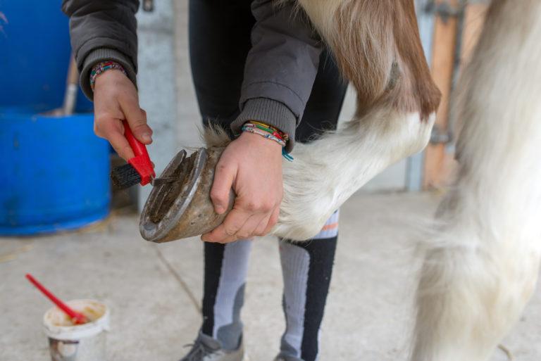 cuidado-cascos-cavalos