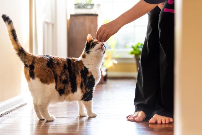 Treino com clicker para gatos: use este método divertido e eficaz para treinar o seu gato