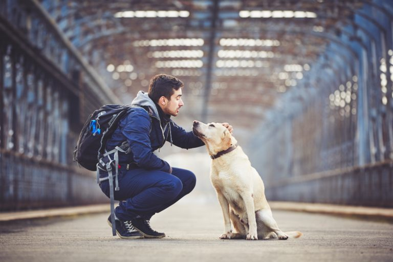 férias com ou sem cão