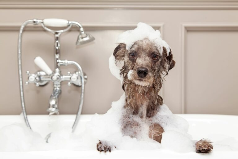 como-dar-banho-ao-cao