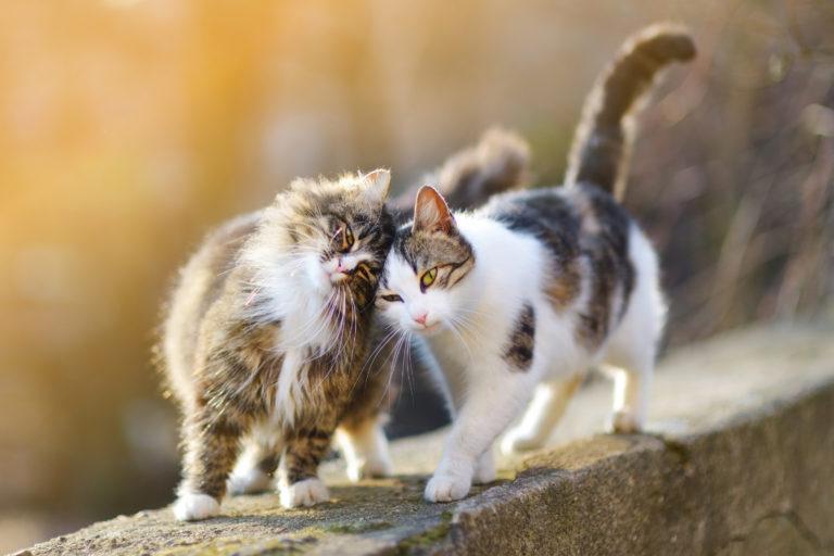 dois-gatos