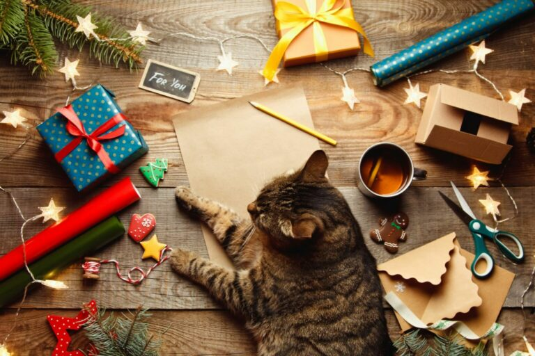 calendario-advento-gatos