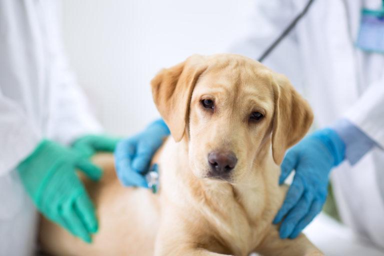 A diarreia nos cães é uma situação relativamente comum.