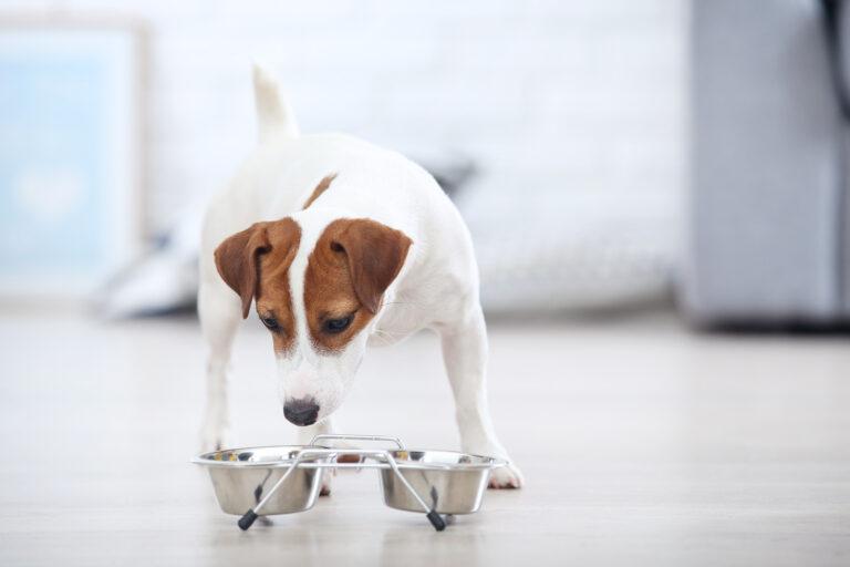 Alterar a alimentação dos cães: é importante observar as reações