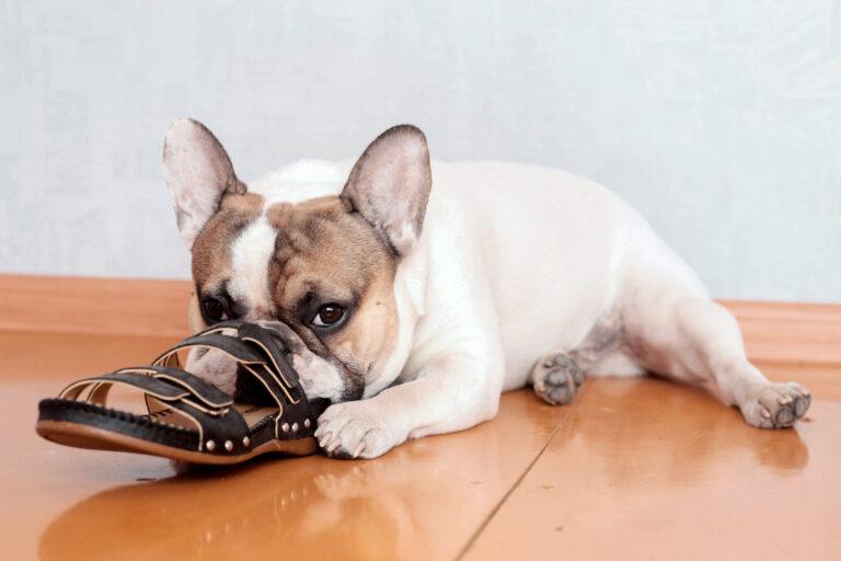 bulldog roe sandálias