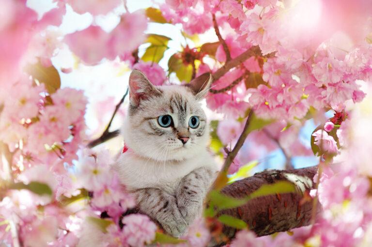 Tabby kitten having rest at the blooming cherry tree