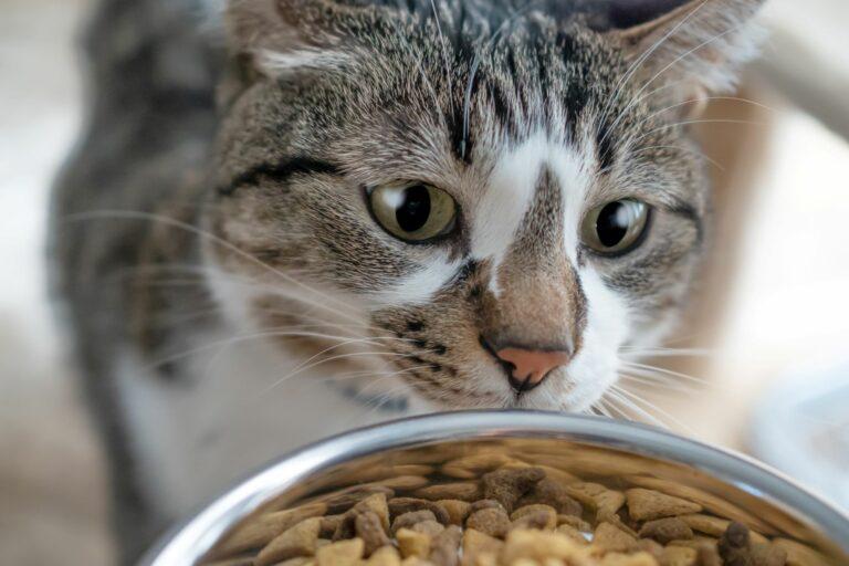 A quantidade certa de comida para gatos: Será o suficiente?