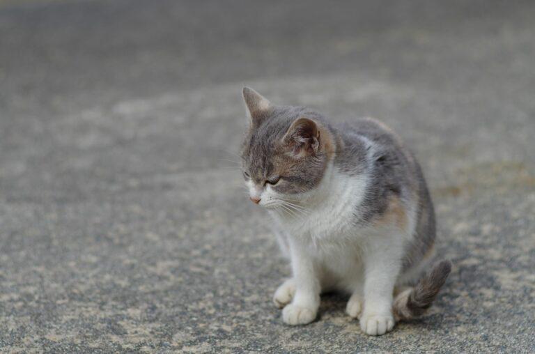 atrite gatos_1