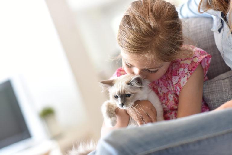 Socialização de gatos