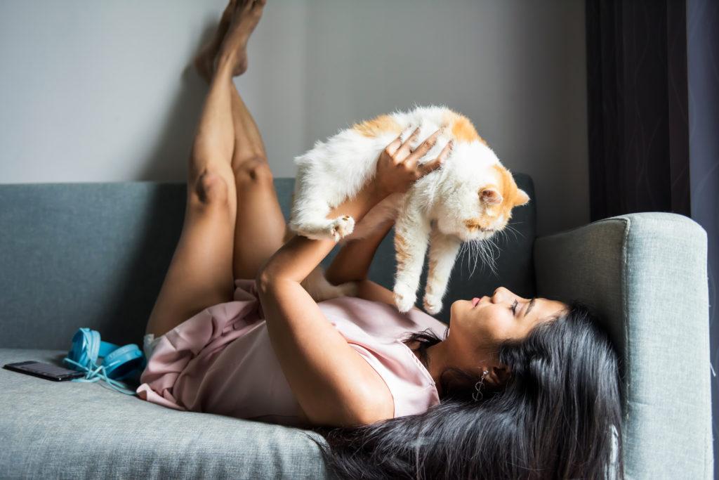Socialização de gatos brincadeira no sofá