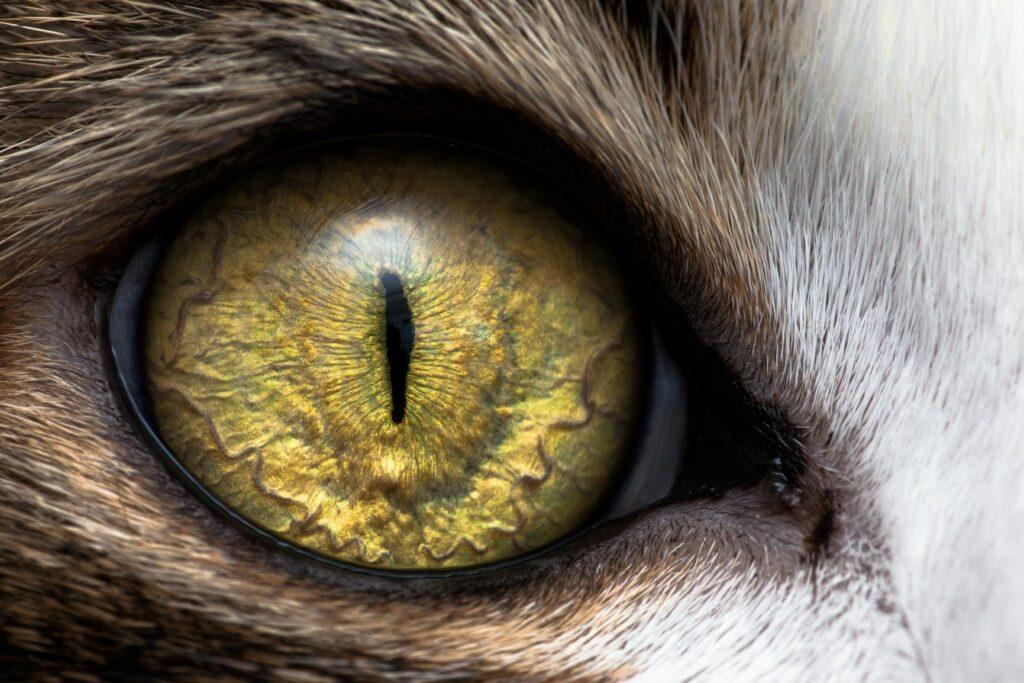 olho de um gato