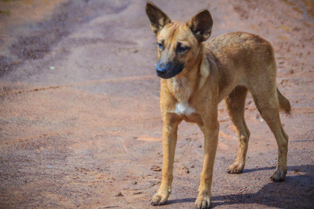Desparasitação interna nos cães