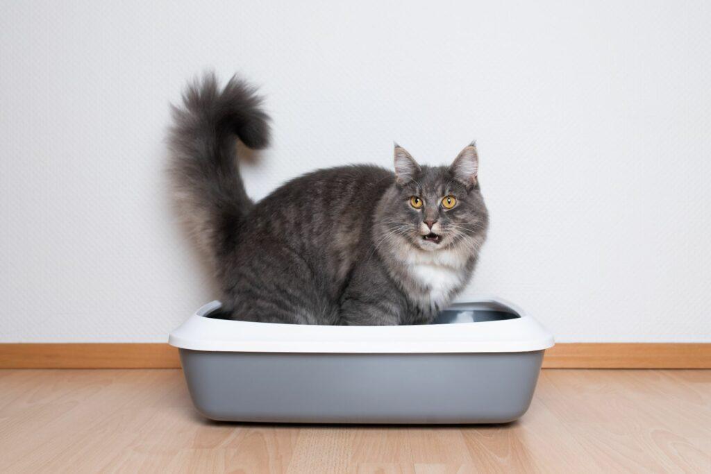Caixas de areia para gatos: gato numa caixa aberta
