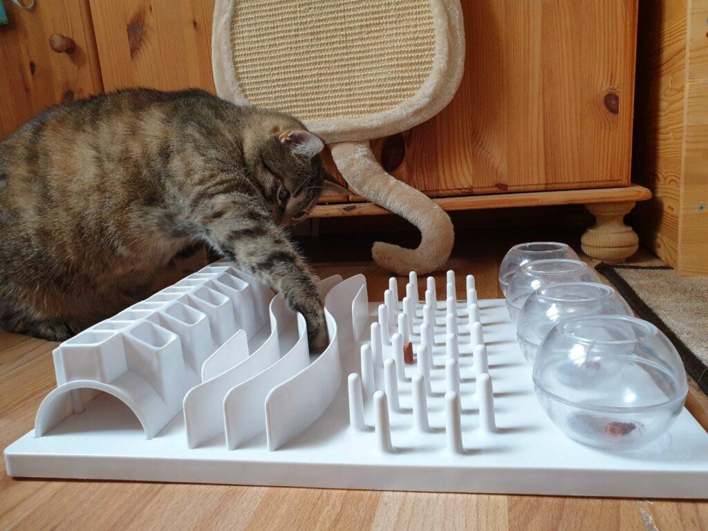 Exercício físico para gatos: tabuleiros de comida