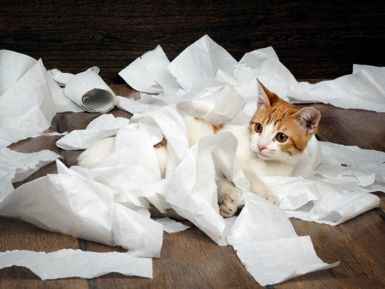 Problemas de higiene nos gatos
