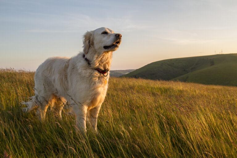 Coccidiose canina: os parasitas estão na natureza