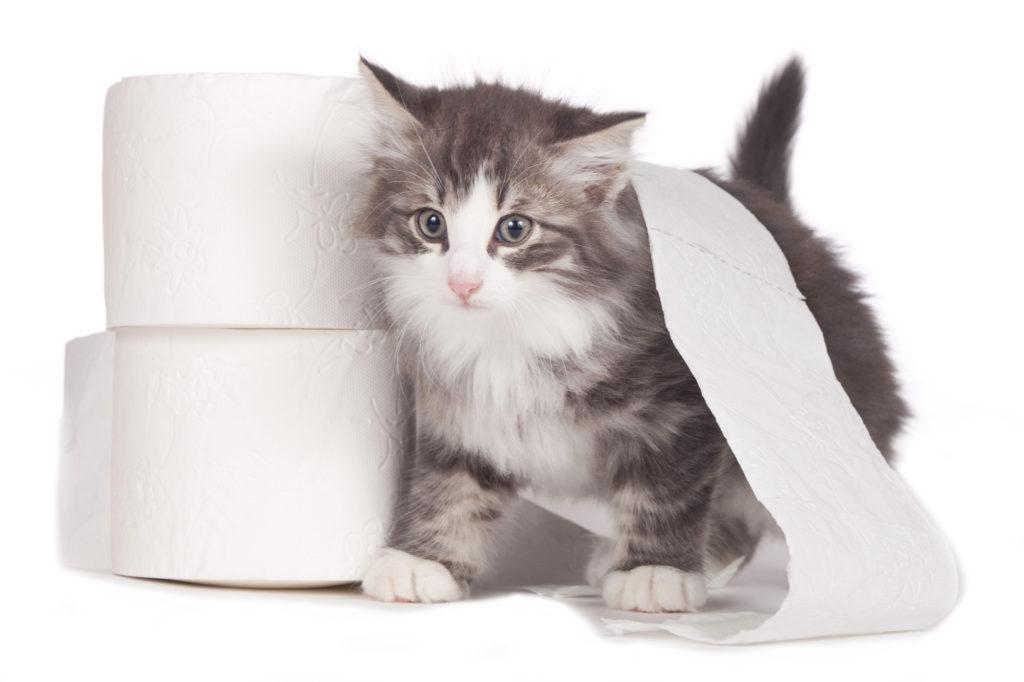 Problemas de higiene nos gatos: gatinho