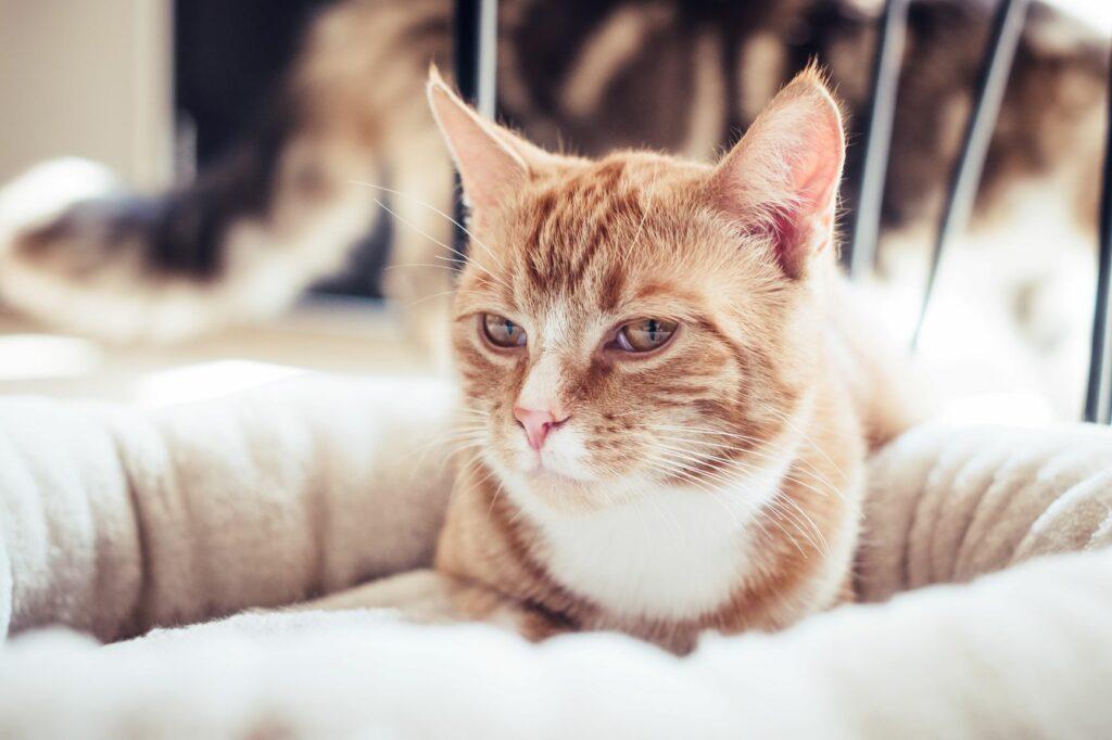 gato deitado na cama