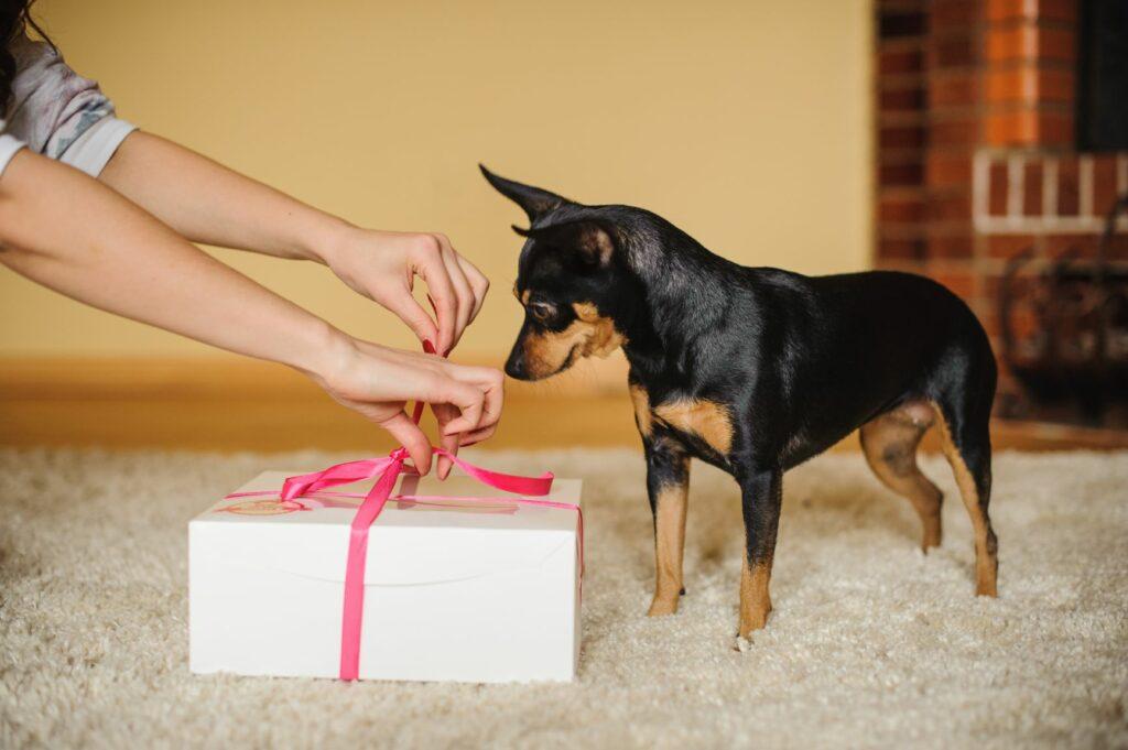 Cão com prenda