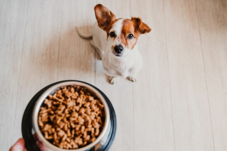 A quantidade de comida para cães: cuidados com a alimentação