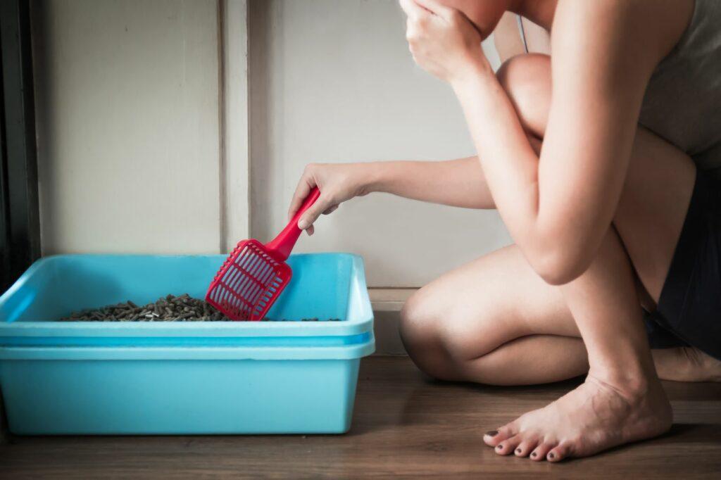 Eliminar manchas e cheiro a urina de gato: como limpar a caixa de areia