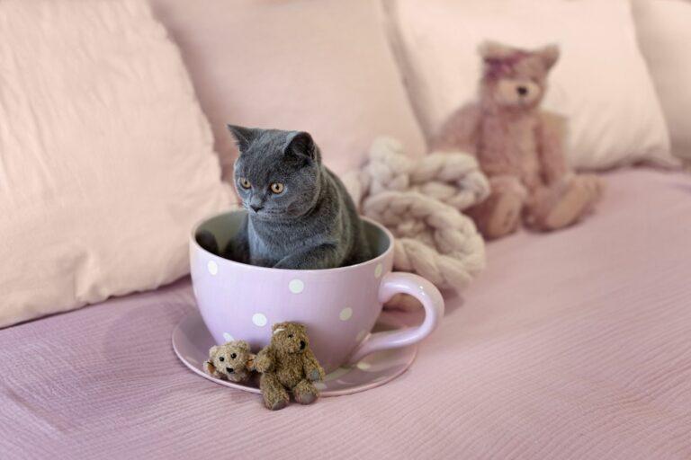 gato teacup-768×512