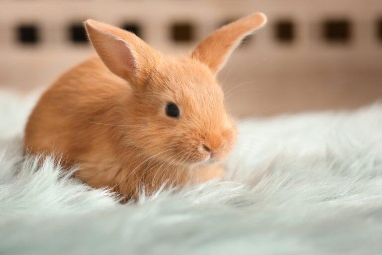 coelho jovem-768×512