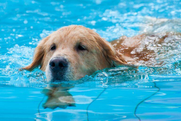 cão nadar focinho fora-768×512