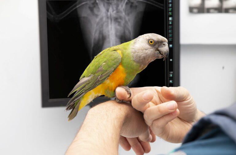 papagaio raio x-768×504