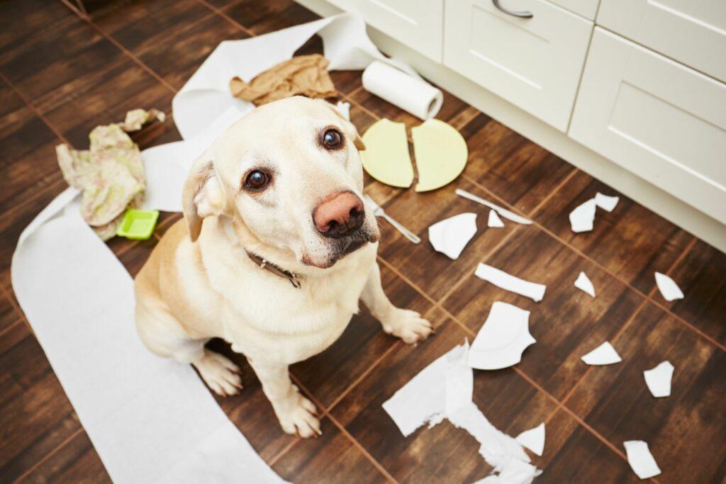 Ansiedade de separação em cães: muitos cães que têm medo de ficar sozinhos apresentam comportamentos indesejados.