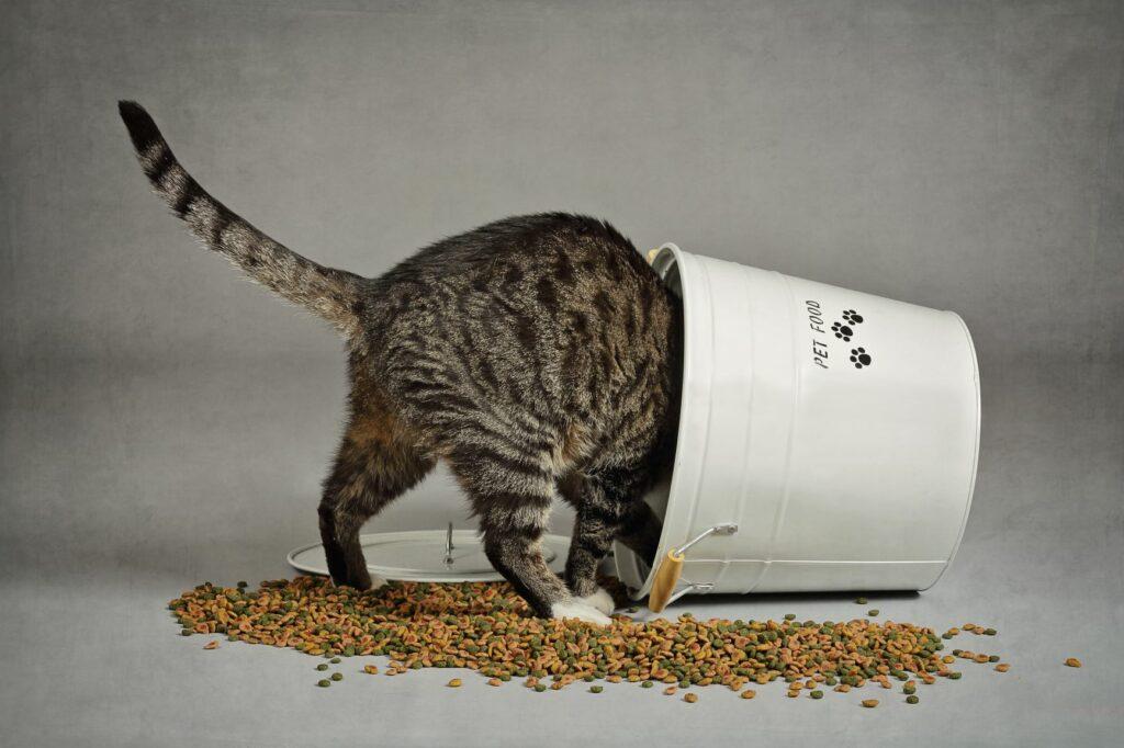 Tem um gato obeso? O problema pode ser excesso de comida